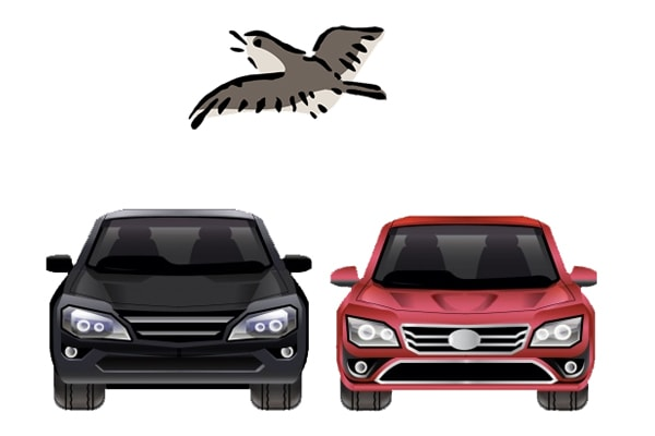 Which car colour do birds choose to poo on?